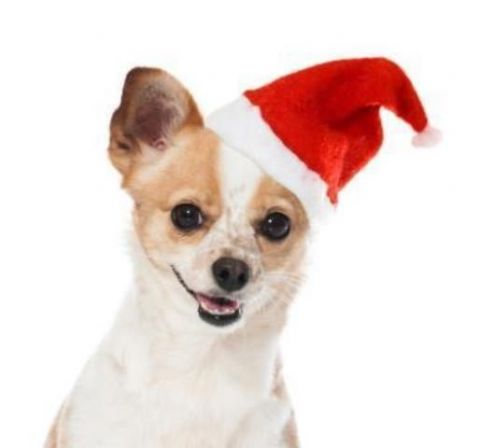 Good Boy Santa Hat 26cm Christmas dog hat for puppies and dogs one size fits all